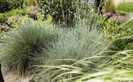 Gartengestaltung-Bepflanzung-n11