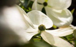 Gartengestaltung-Bepflanzung-n2
