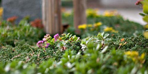 Pflege Ihrer Blumen- und Pflanzenbeete