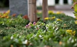 pflanzen garten bepflanzung gärtner