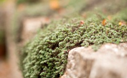 stein stauden pflanzen garten bepflanzung gärtner