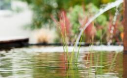 Gartenteich Wasser im Garten Gartenbau