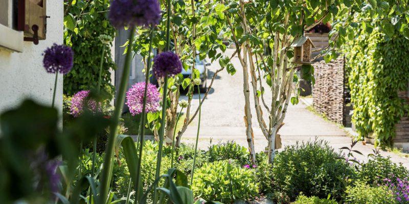 Gartengestaltung-Bepflanzung-n10