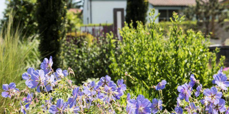 Gartengestaltung-Bepflanzung-n7