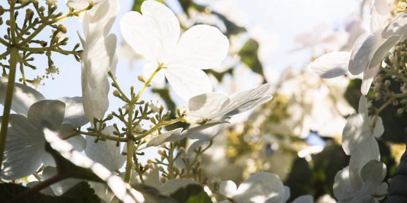 Gartengestaltung-Bepflanzung-n9